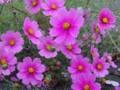 [花][ハイク]