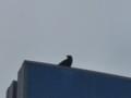 [鳥][ハイク]鳥