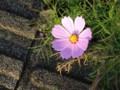 [花][ハイク]花写真