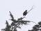 [ハイク][鳥]