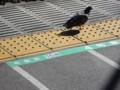 [鳥][とり鉄][ハイク]鳥