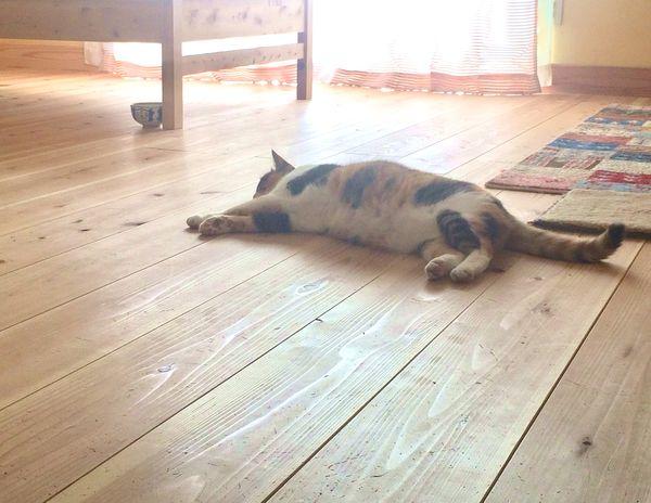 無垢 フローリング ワックス 猫がいる家にオススメの無垢フローリングワックス、オイル - 毎日なんか