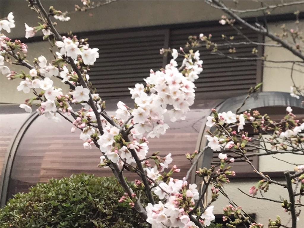 f:id:nekochiyo3:20200401202026j:image