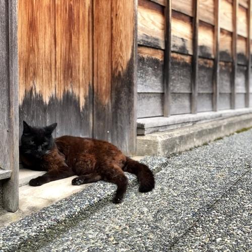ひがし茶屋街の猫