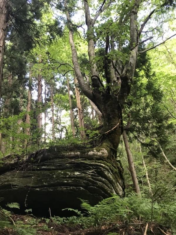 岩井滝への道