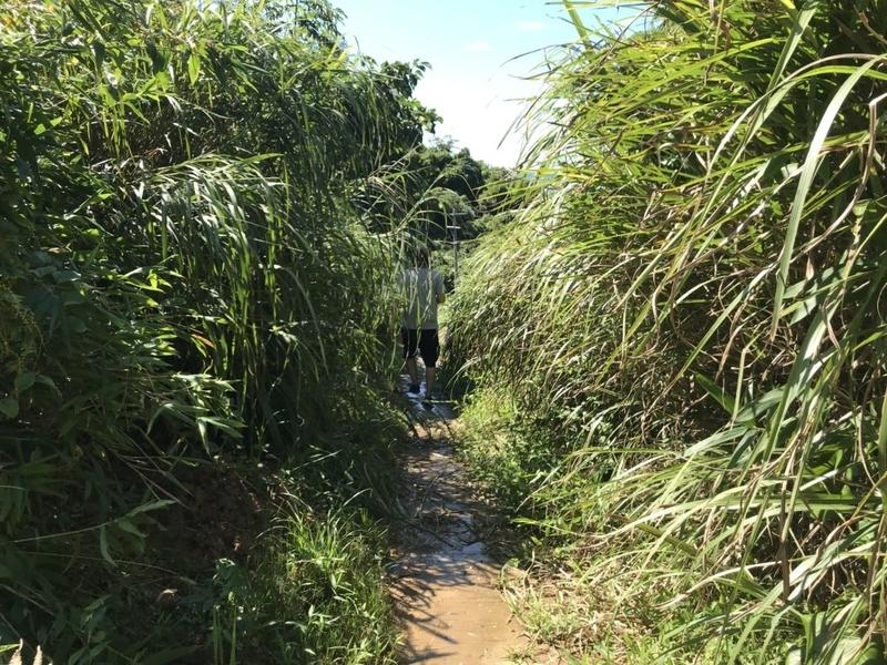 熊井浜への道