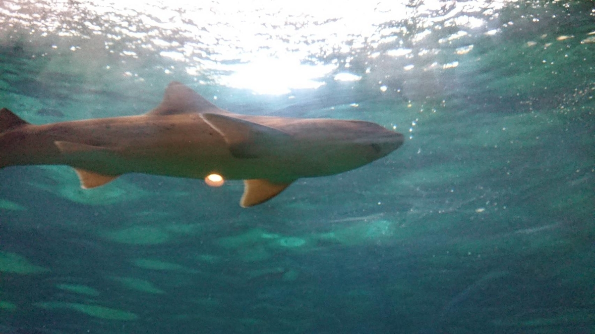 f:id:nekoja-peterpan:20190626011048j:plain