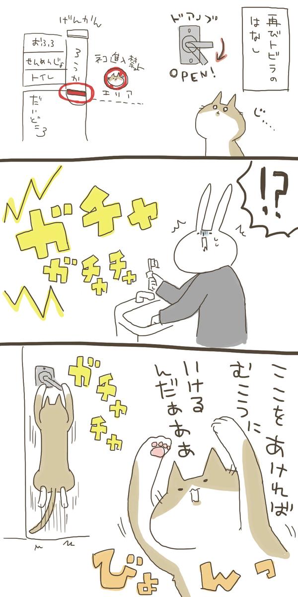 f:id:nekokomachi:20200119211250j:plain