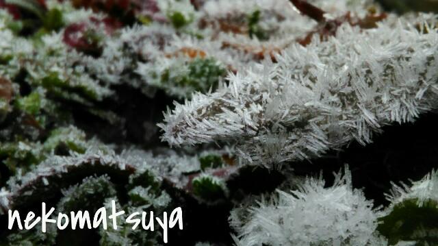 f:id:nekomatsuyayamabu:20190221144321j:image