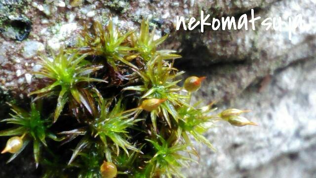 f:id:nekomatsuyayamabu:20190321143739j:image