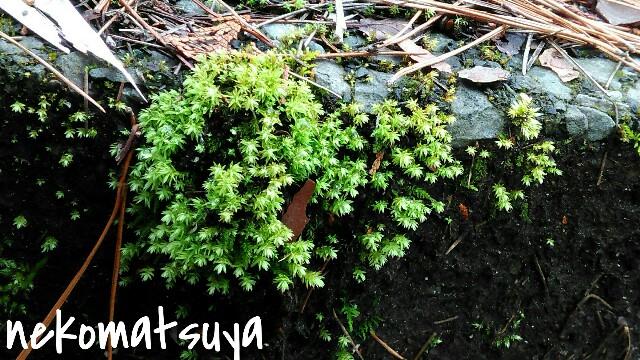 f:id:nekomatsuyayamabu:20190324222934j:image