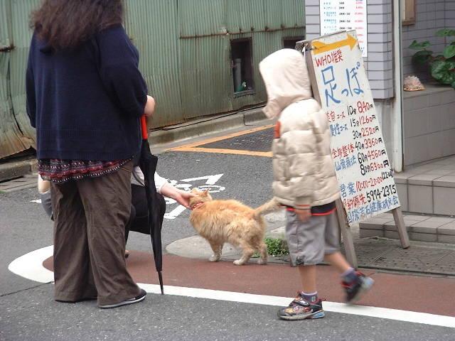 都内某所の猫