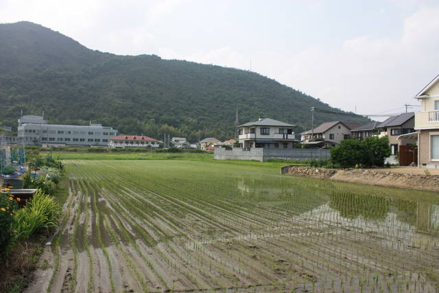 坂越の水田