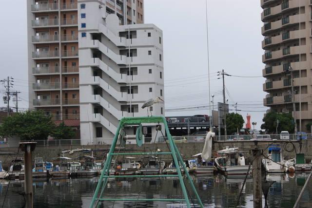明石漁港 せり市 船上から狙うアオサギ
