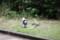 親子猫 - 明石公園