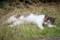 明石公園で眠る親猫