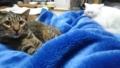 うちのねこうちの猫