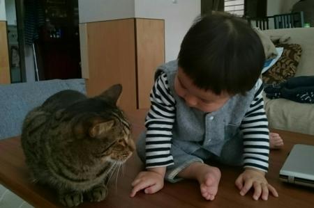 f:id:nekonohanashi:20180228102425j:image