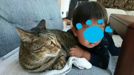 f:id:nekonohanashi:20180429075928j:image