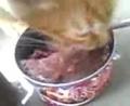 トラ美猫缶食す笑