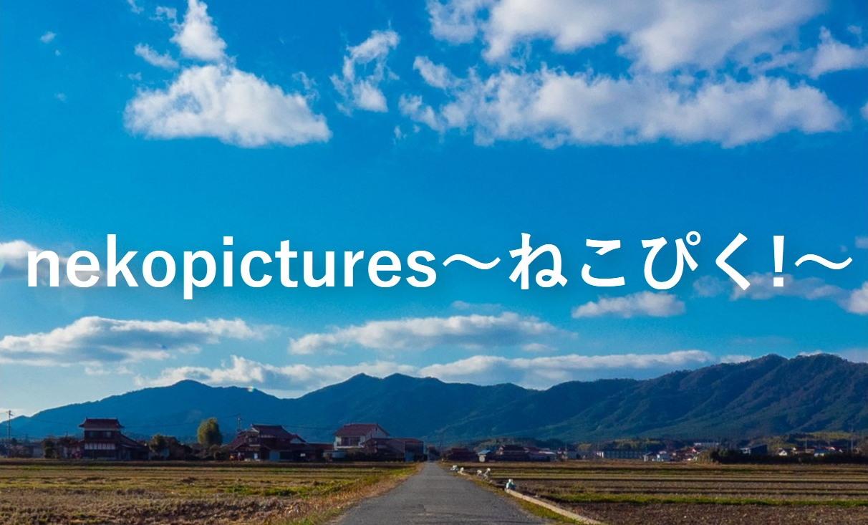 nekopictures~ねこぴく!~