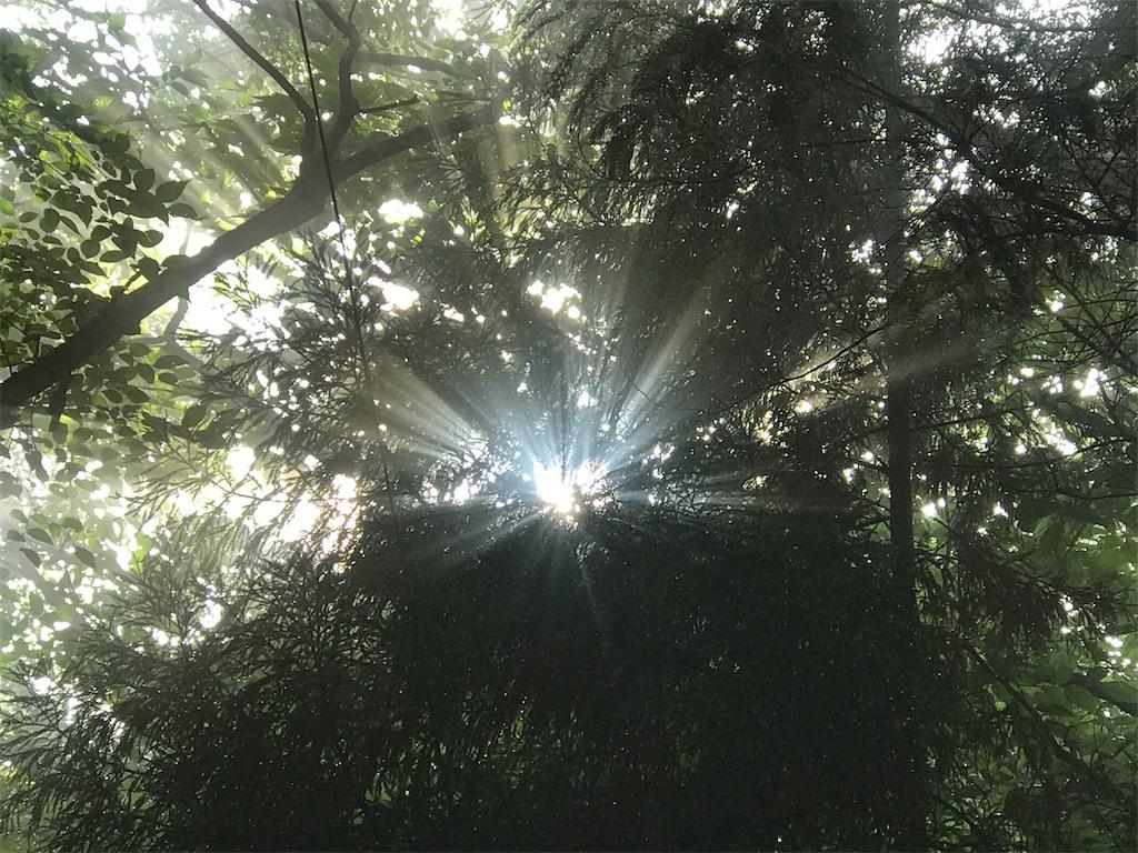靄を通して梢から洩れる輝き