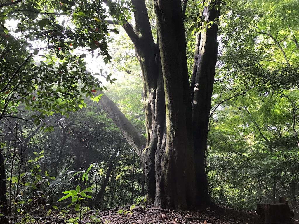 静かに佇む大樹の息づかい