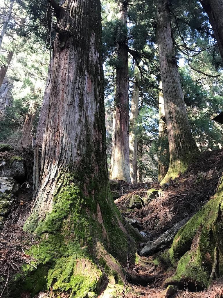 杉の古木の間の道