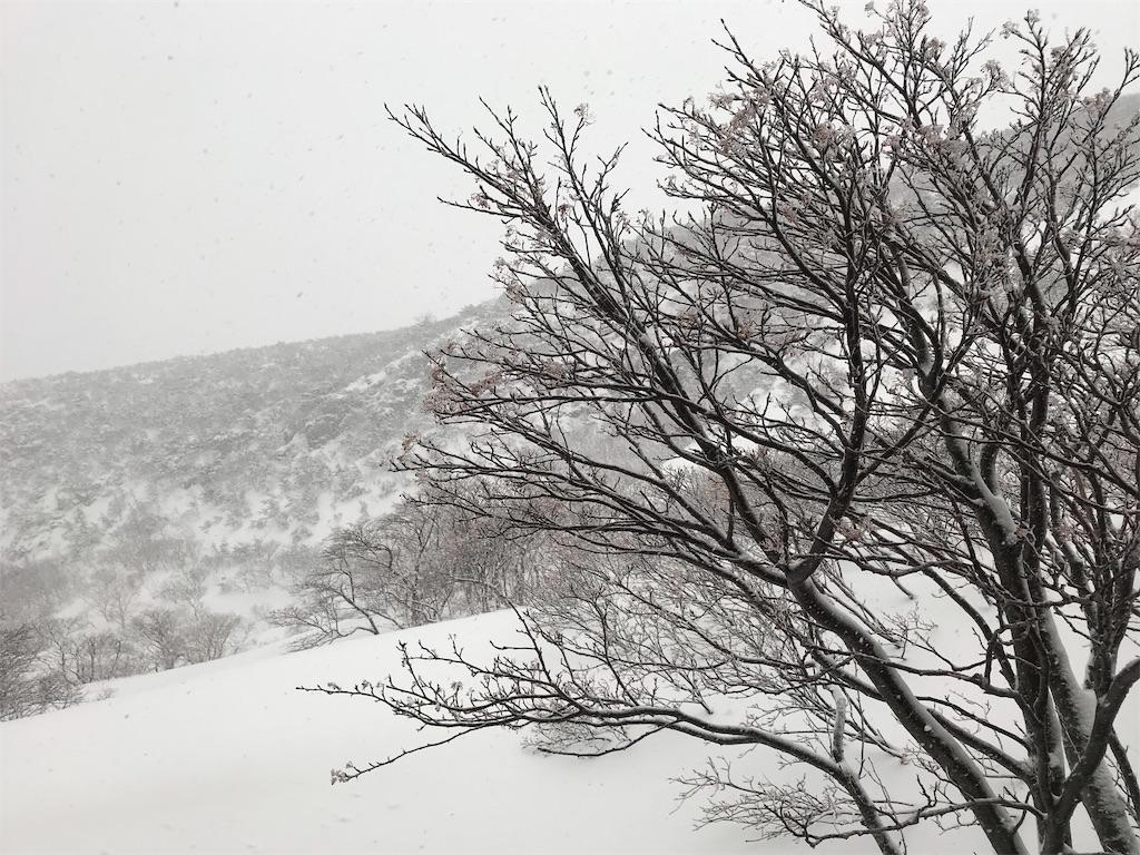 吹雪の中に立つ木