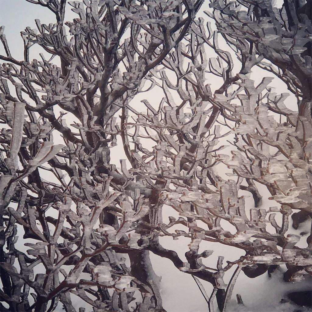 凍った灌木アップ