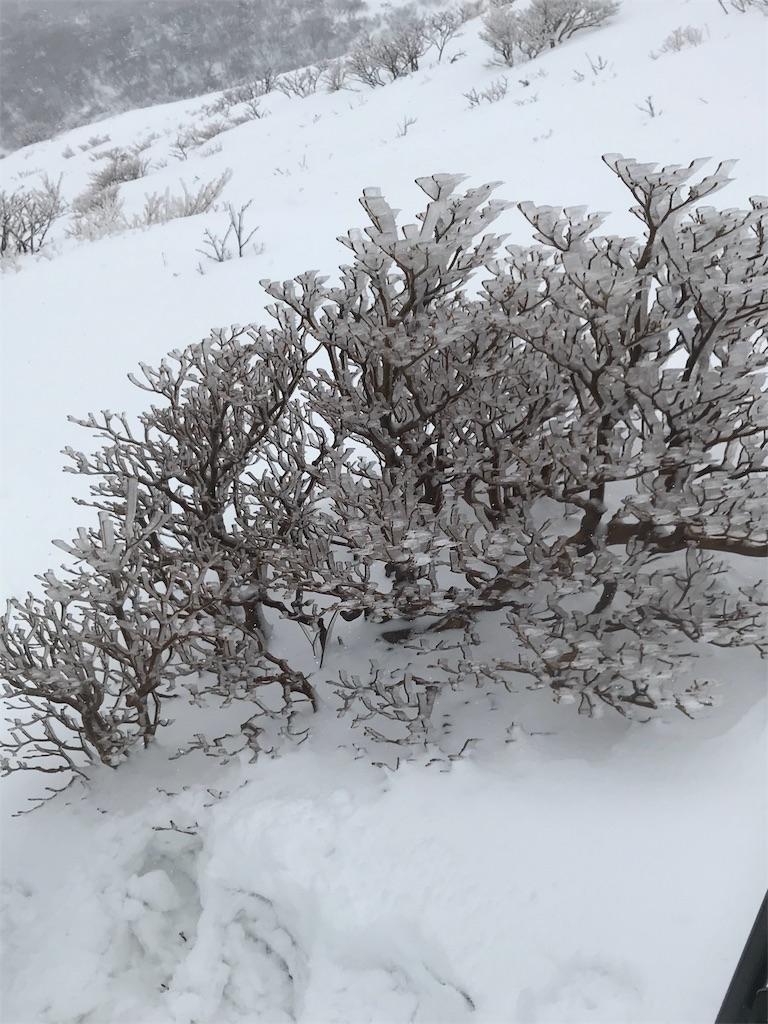 凍った灌木