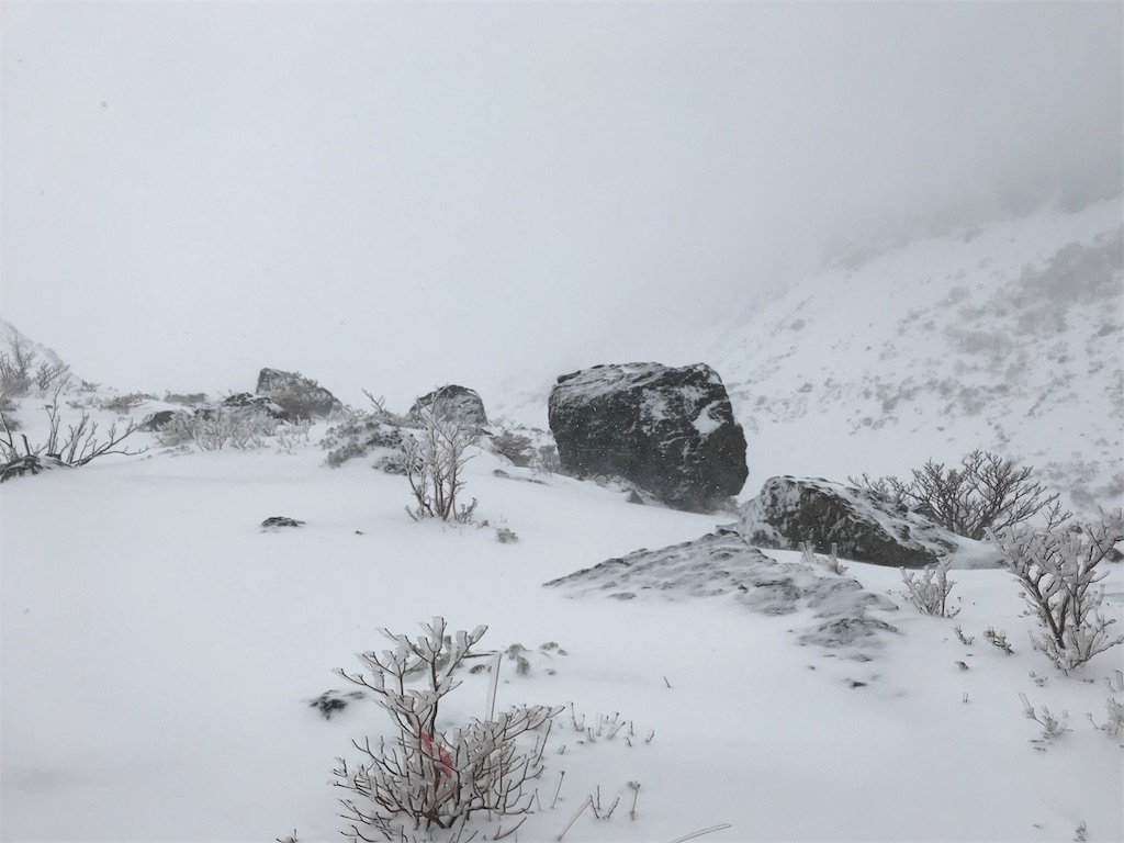 吹雪の中の岩と木々