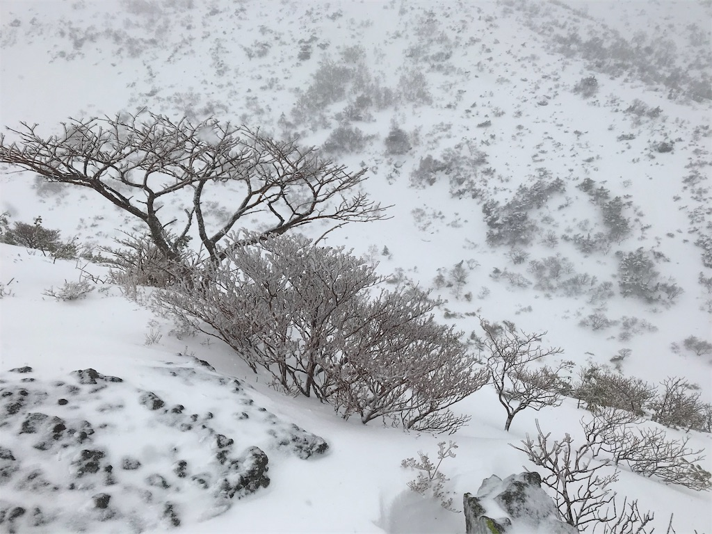 雪の斜面と灌木