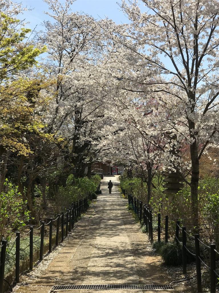 桜の木のアーチの下を行く人