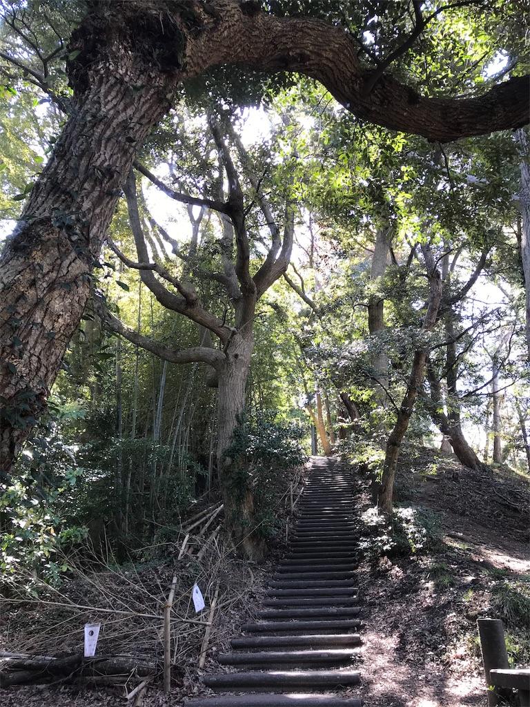 竹林と階段