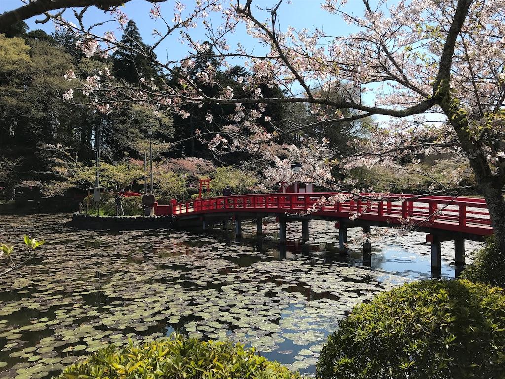 桜と橋と睡蓮