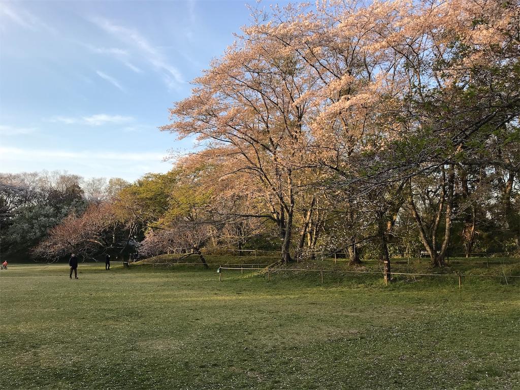 佐倉城址公園の広場