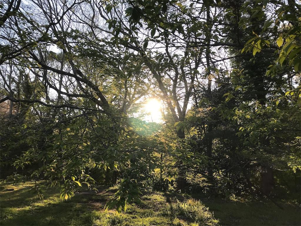 夕陽と丸い森の窓