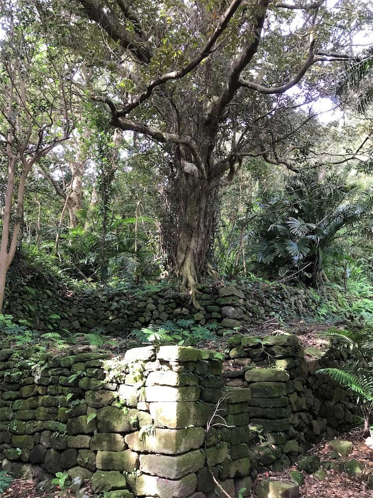 石垣と巨木