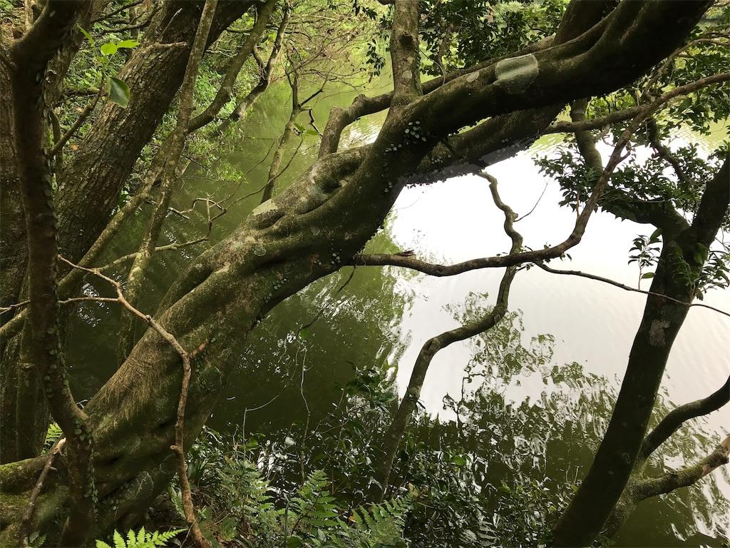 御代ヶ池の緑色の水面