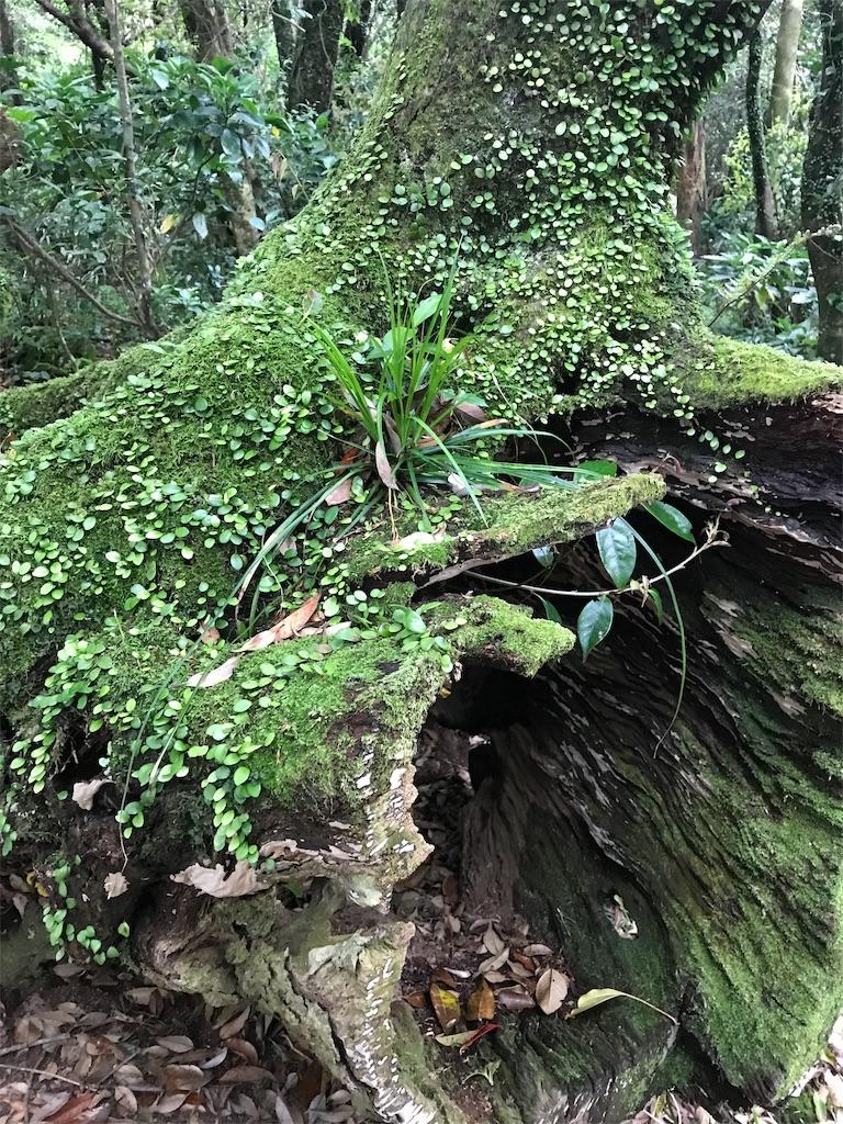 黒崎高尾の木