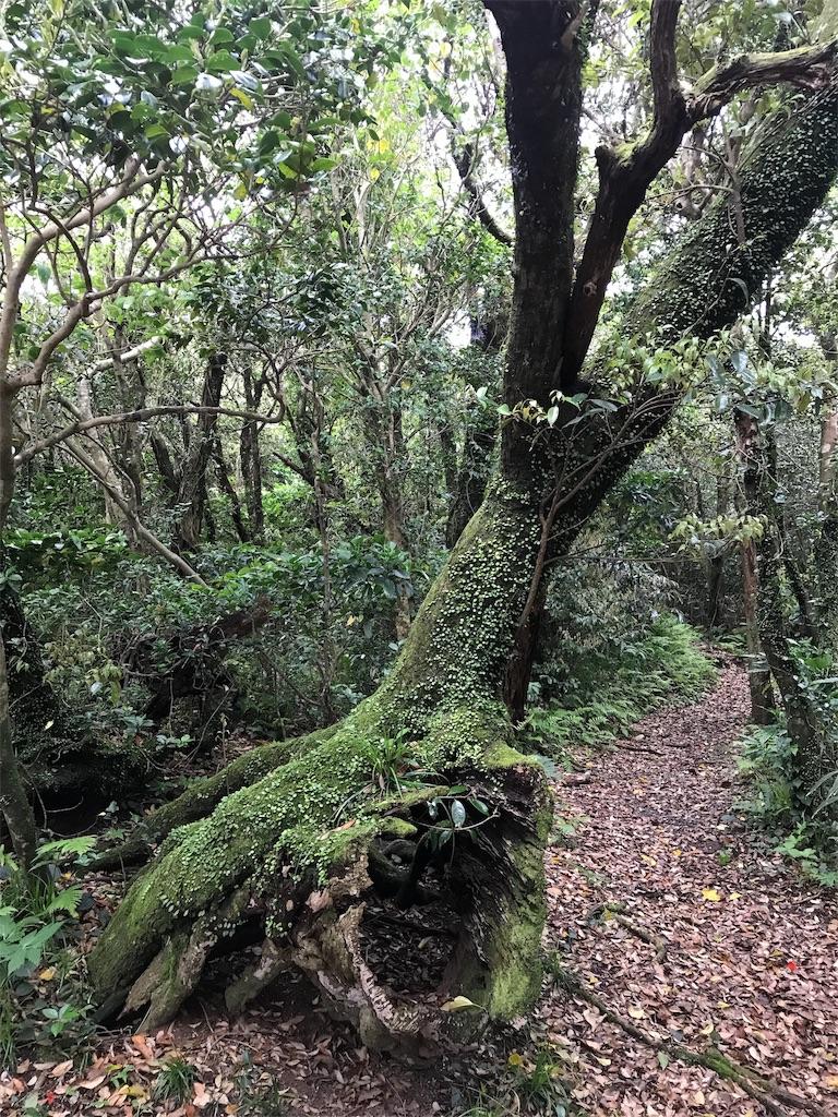 黒崎高尾の森