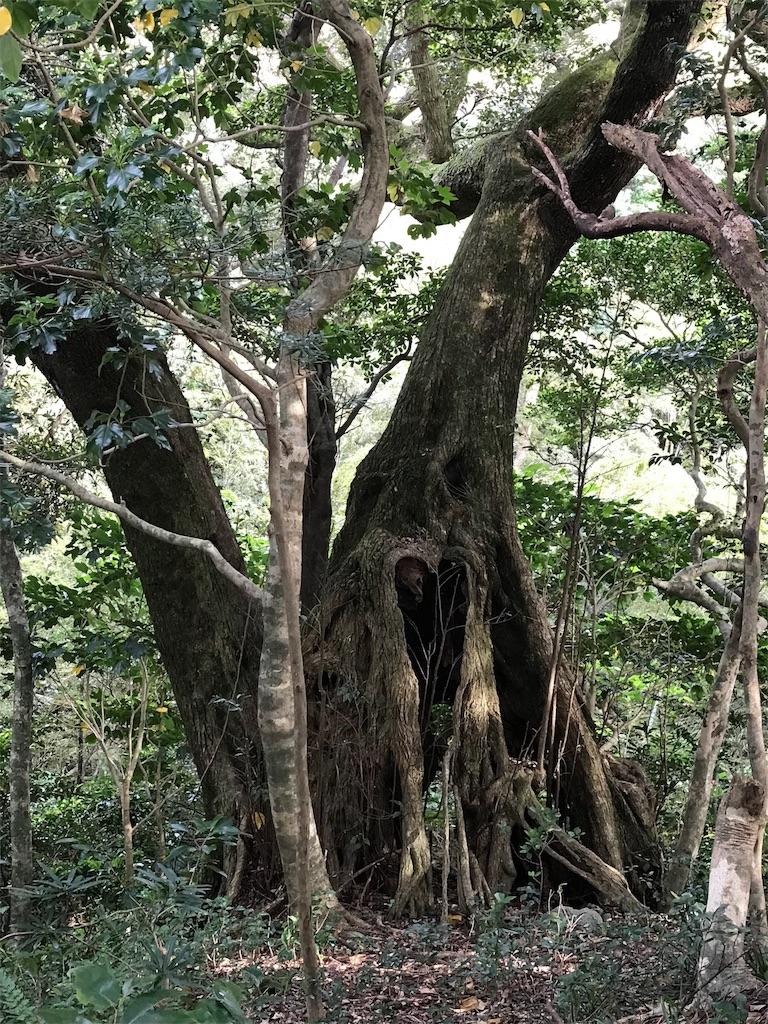 タンテイロの森の巨樹