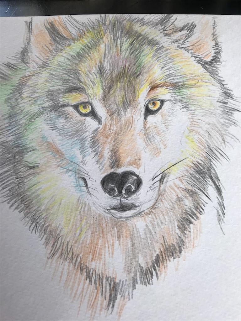 オオカミの色鉛筆ドローイング