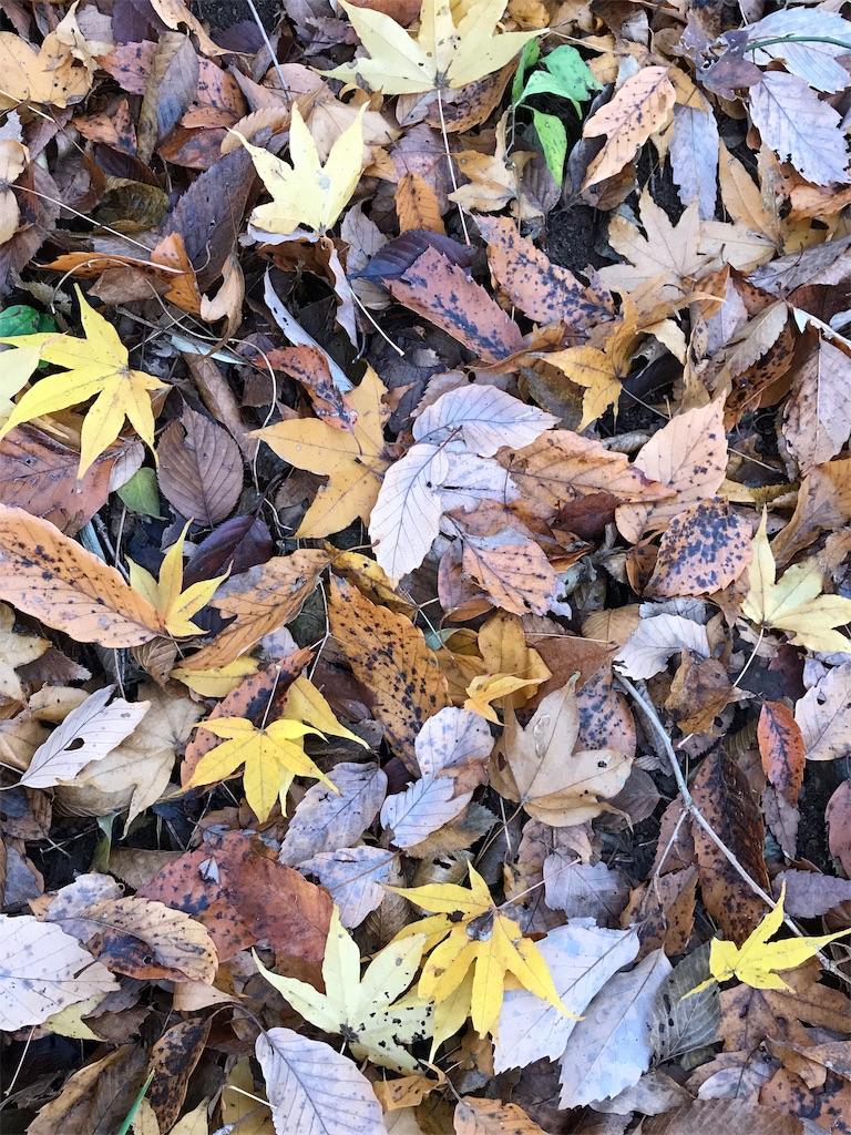 黄色や緑や茶色の色とりどりの落ち葉