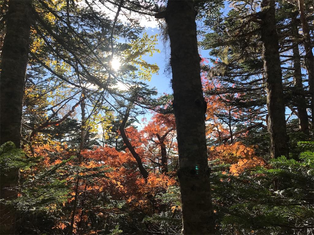 紅葉の樹林帯を行く