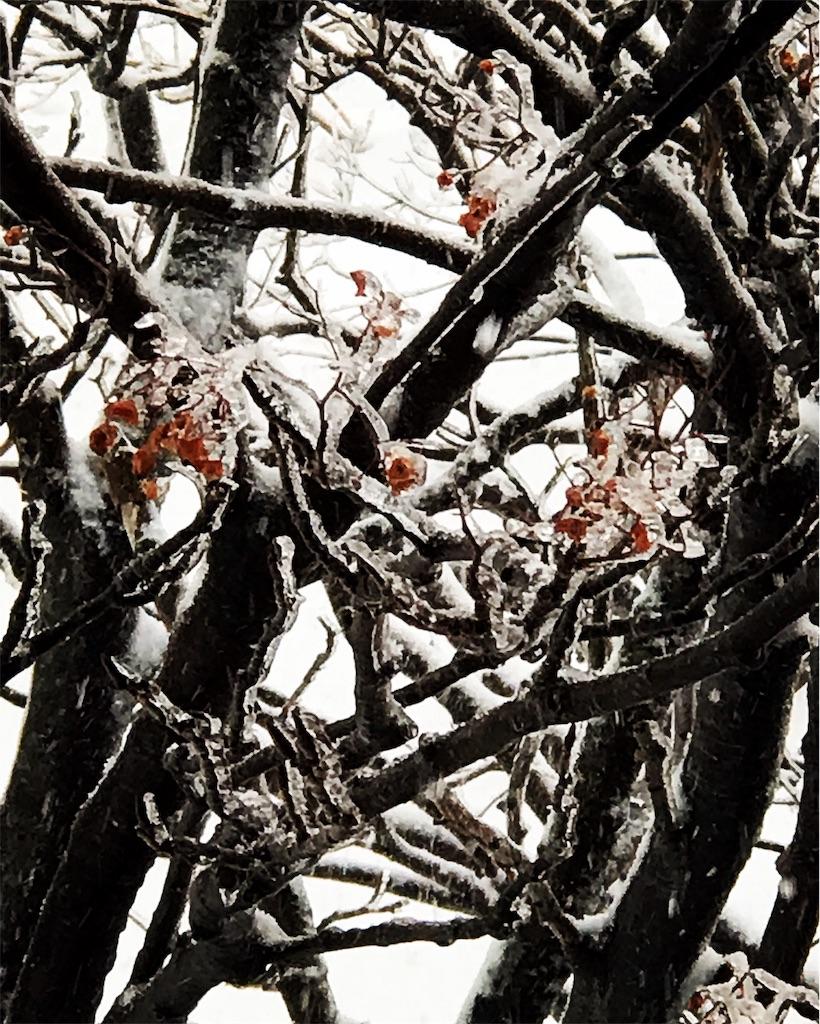 凍るつく赤い木の実