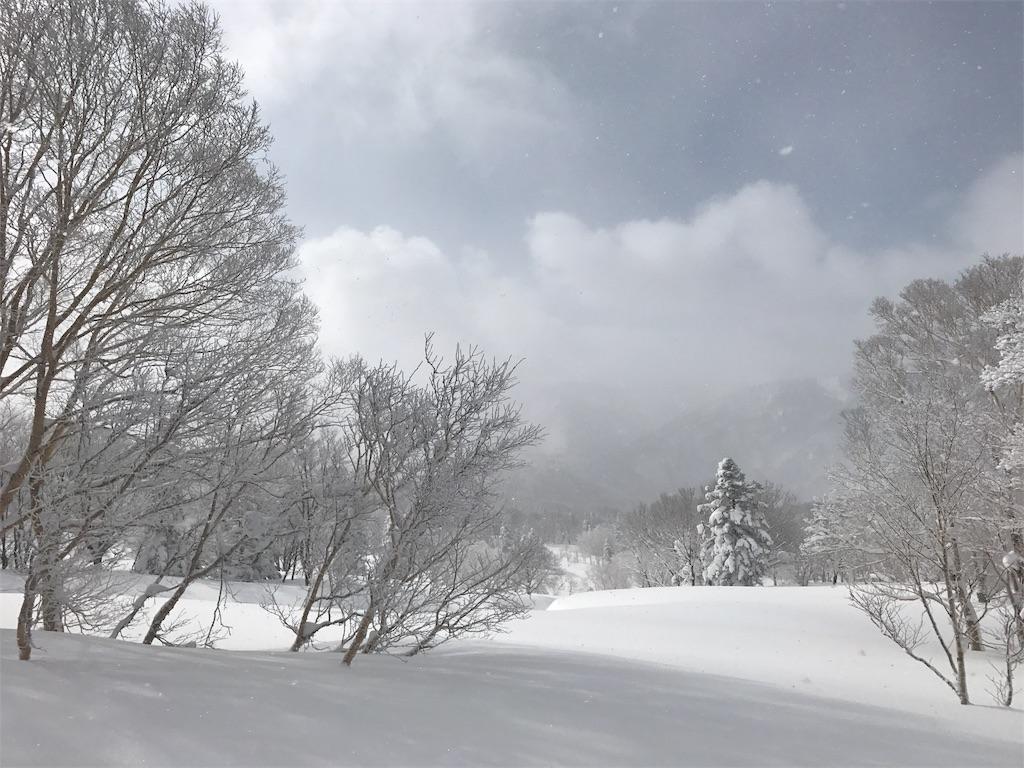 ふかふかに積もった雪。