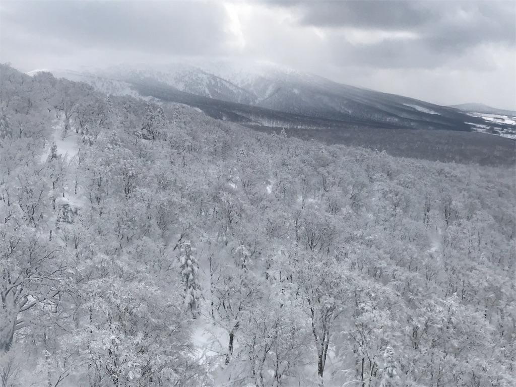標高が下がって樹林が密になっていく斜面