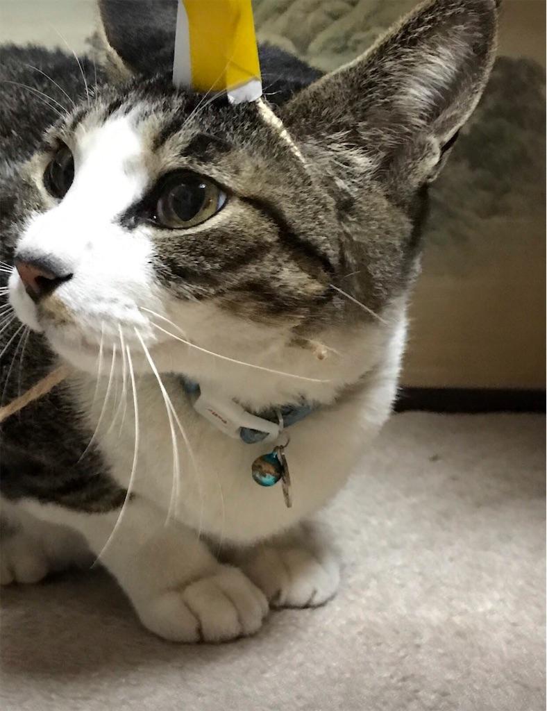 ハテナ顔のネコ